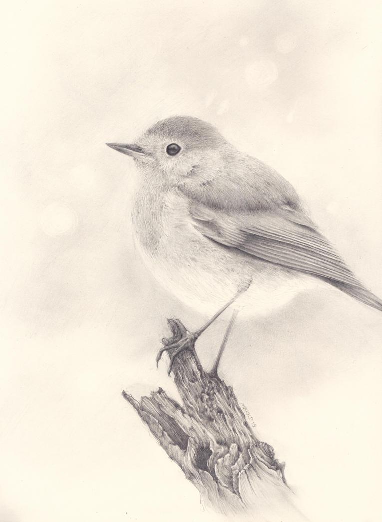 Roodborstje (Robin) by MBKKR