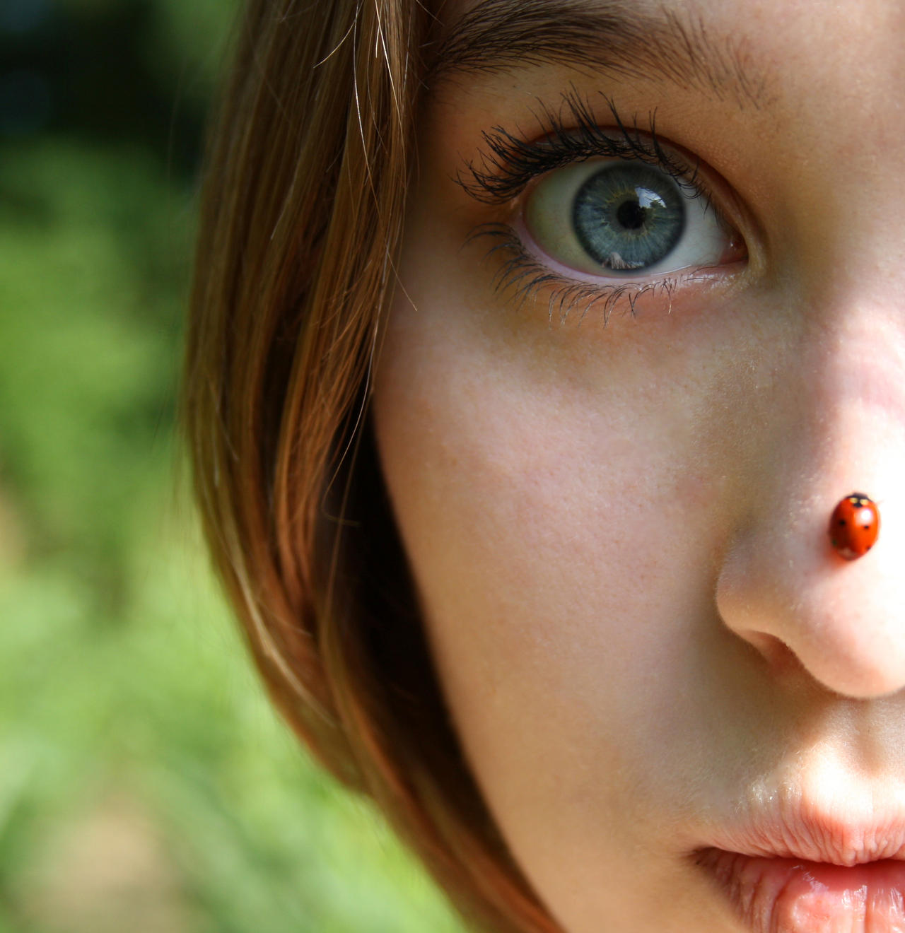 Ladybug by Mynze