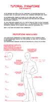 Anatomy Tutorial - french