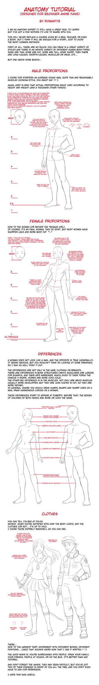 Anatomy tutorial for beginners