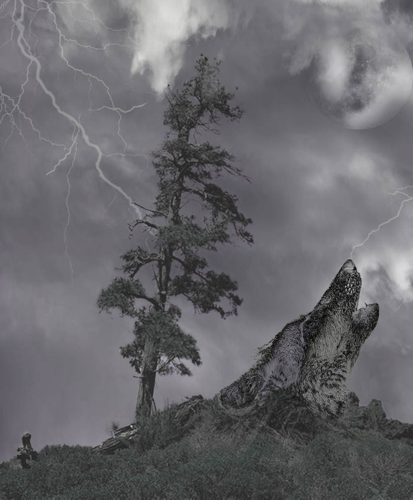 Jack pine with wolf