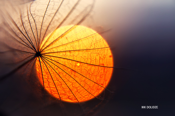 sun by SpeECc