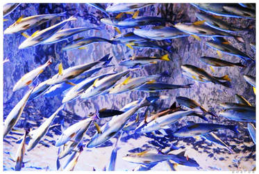 dreamt about sardines by enelde