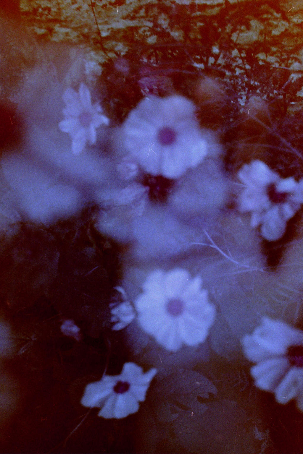 Ghost Flowers by EmWoodImagery on DeviantArt