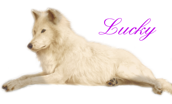 ^ Twilightstars ^ Wolves Lucky_by_Canis_Borealis