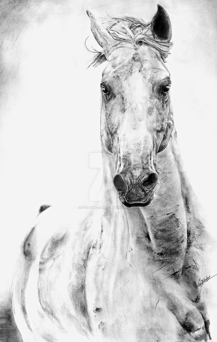 Best pencil sketch equine by j equine j art