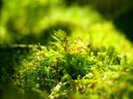 Macro World, Greenery