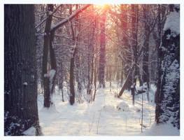 Winter Forest Sun
