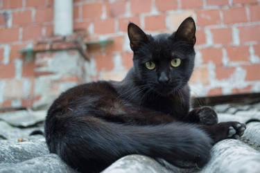Black Cat [Stock] by IvaxXx