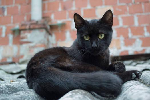 Black Cat [Stock]