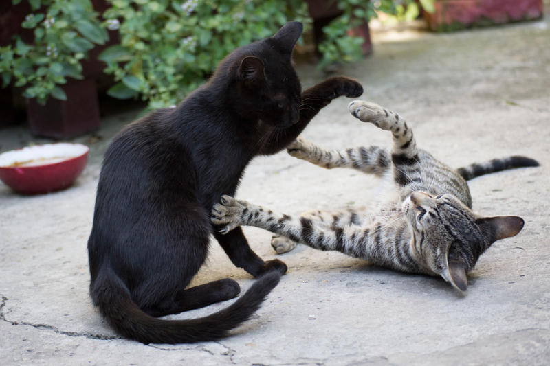 Cats are playing 2 [Stock] by IvaxXx