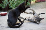Cats are playing 2 [Stock]