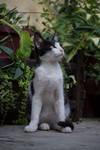 Cat 5 [Stock]