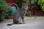 Cat 7 [Stock]