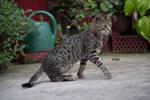 Cat 8 [Stock]