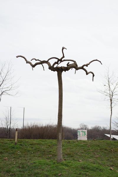 Weird Tree by IvaxXx