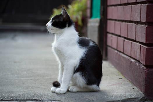 Cat 11 [Stock]