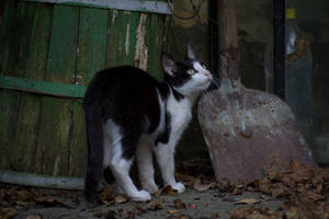 Cat 34 [Stock]