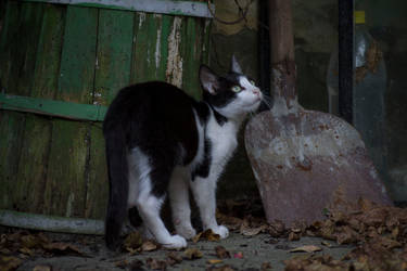 Cat 34 [Stock] by IvaxXx