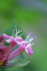 Botanical garden 7