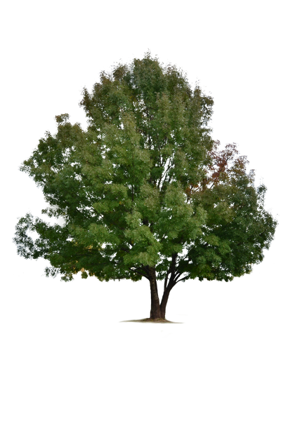 Tree [PNG] by IvaxXx