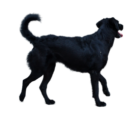 Dog [PNG]