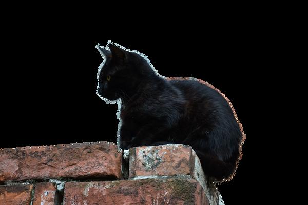 Black Cat [PNG] by IvaxXx on DeviantArt