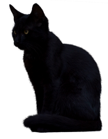Black Cat 2 [PNG] by IvaxXx
