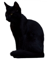 Black Cat 2 [PNG]