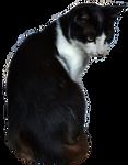 Cat [PNG]