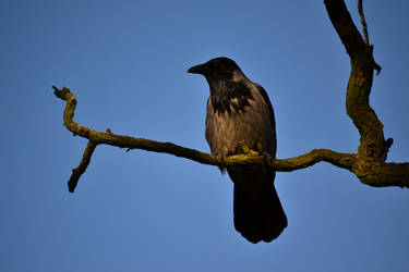 Bird on branch [Stock]