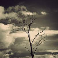 LastOne by arayo