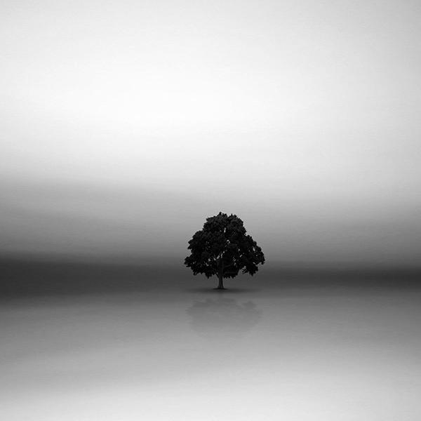 Potrait of the tree I by arayo