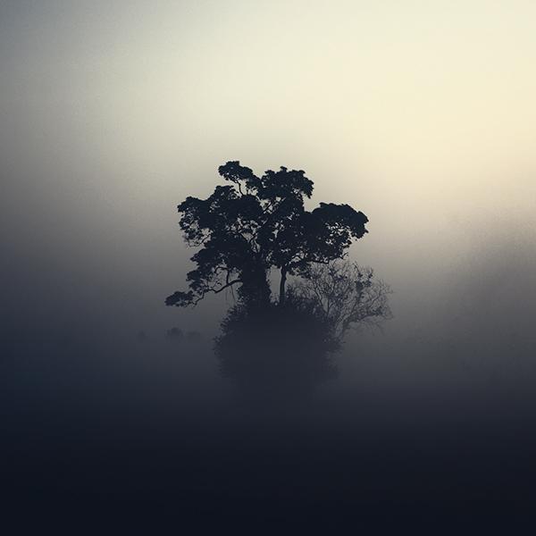 Potrait of the tree II by arayo