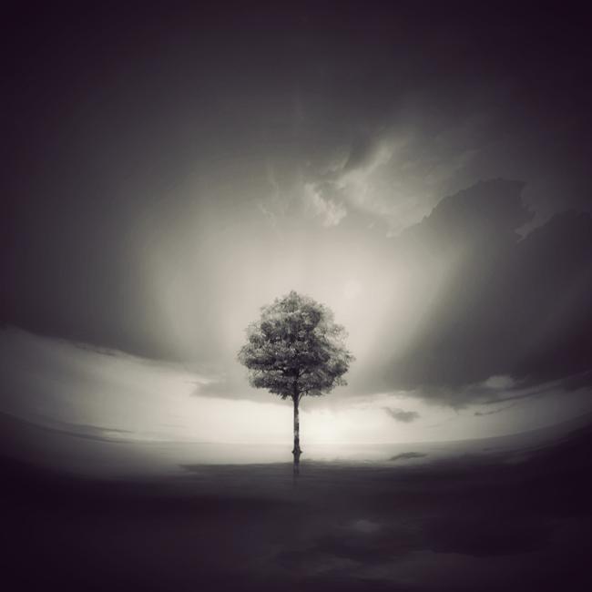 portrait of the tree by arayo