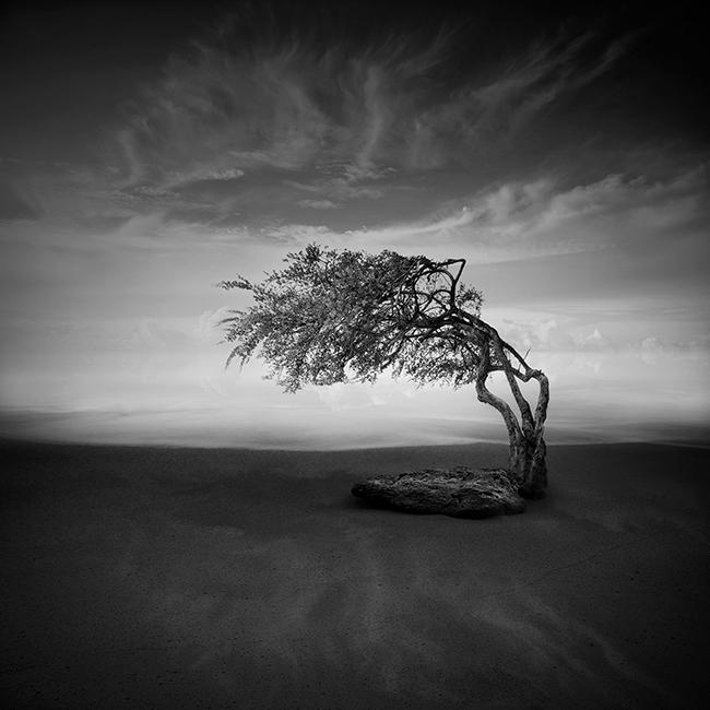 nestless by arayo