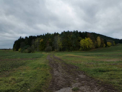 Reinsfeld