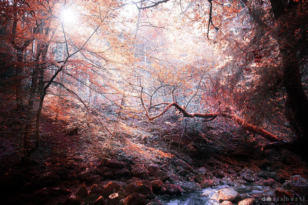 Mystic by Light1108