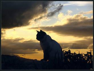 Cat Mb07 by alfa