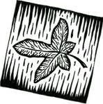 Leaf by marmota-b