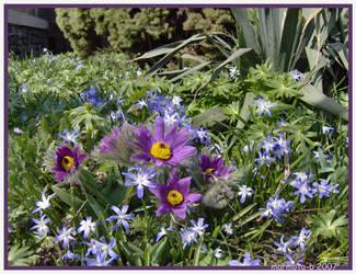 Sugary spring by marmota-b