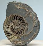 fossilizing