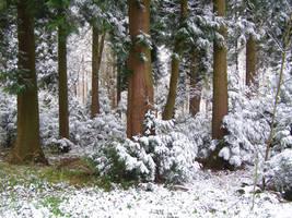 Snow Scene.. by chop-stock