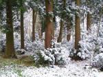 Snow Scene..