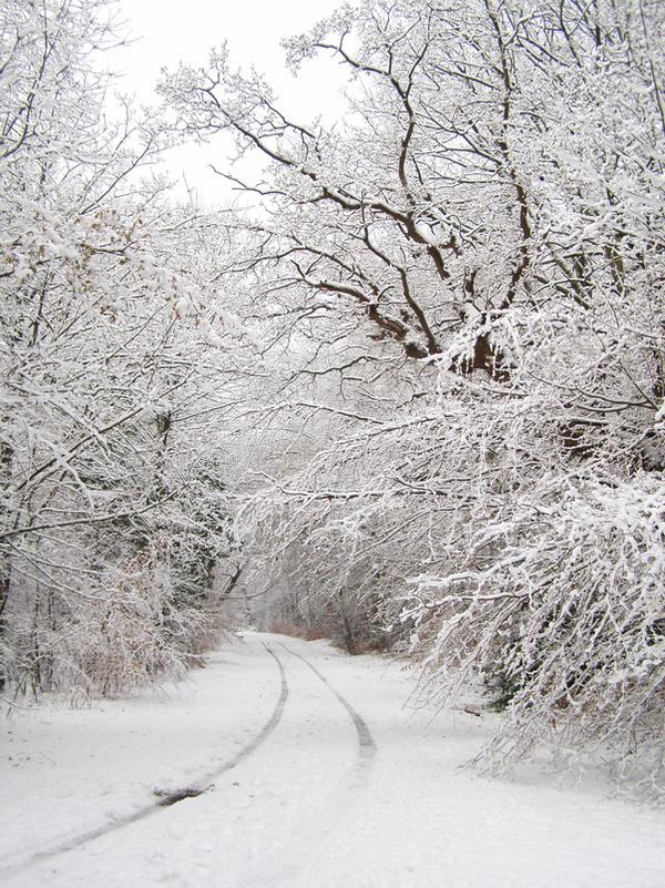 Snow Path 2