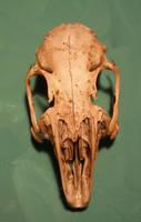 rabbit skull 4...