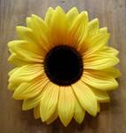in bloom...
