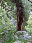 Split tree 2...