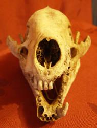 Skull Stock 3..
