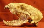 Skull Stock 4..